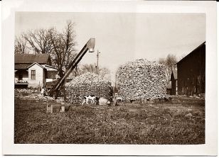 Surplus corn from drained land